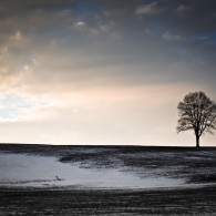 Fine Art - Lonesome Tree On A Hill III