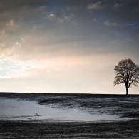 Fine Art - Lonesome Tree On A Hill III